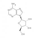 ST009496 Adenosine, adenine riboside