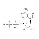 ST057097 Adenosine 5'-diphosphate, monosodium salt dihydrate